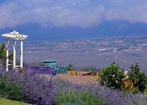 Alii Kula Lavender Farm